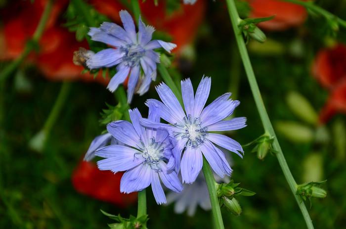 liliana ghergusi