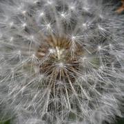 ion florian ciorcășel