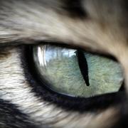 Fotografia macro&close-up